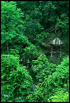 Path and pavillon on steep hillside between Qingyin and Hongchunping. Emei Shan, Sichuan, China ( color)
