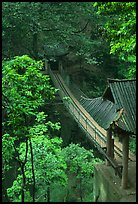Suspension bridge between Qingyin and Hongchunping. Emei Shan, Sichuan, China