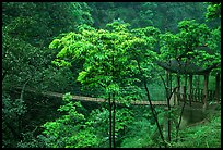 Suspension bridge between Qingyin and Hongchunping. Emei Shan, Sichuan, China ( color)