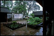 Courtyard of Hongchunping temple in the rain. Emei Shan, Sichuan, China ( color)