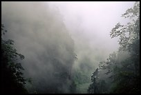Cliffs and trees in mist between Hongchunping and Xiangfeng. Emei Shan, Sichuan, China