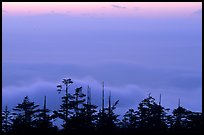 Sunset on a sea of clouds. Emei Shan, Sichuan, China ( color)
