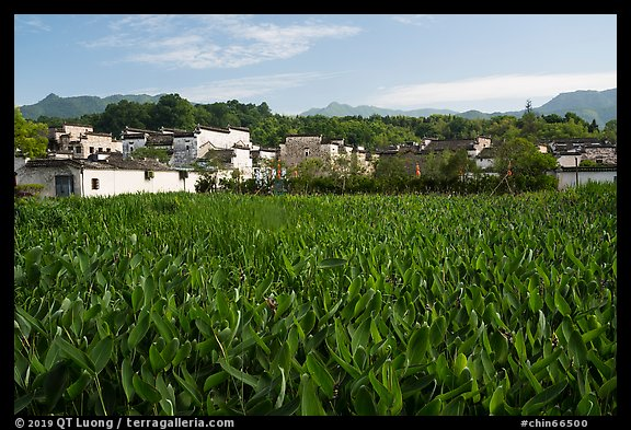 Field and village. Hongcun Village, Anhui, China (color)