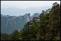 Forest and peaks. Huangshan Mountain, China ( color)