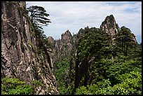 Huangshuan pines clinging on granite cliffs. Huangshan Mountain, China ( color)
