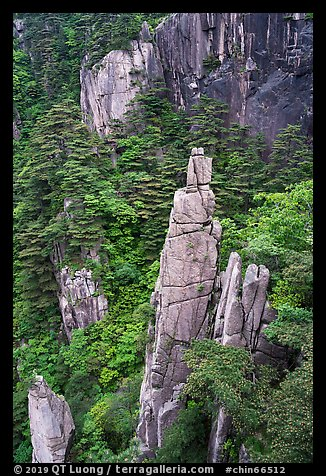 Granite spires rising from forest. Huangshan Mountain, China (color)