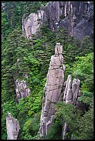 Granite spires rising from forest. Huangshan Mountain, China ( color)