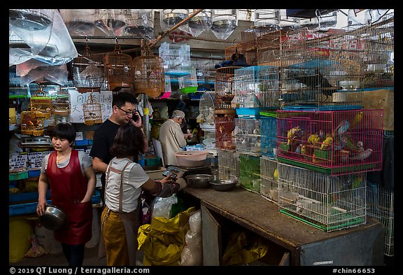 Caged birds for sale at Bird and Insect Market. Shanghai, China (color)