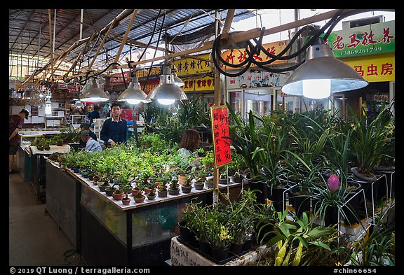 Plants for sale at Bird and Insect Market. Shanghai, China (color)