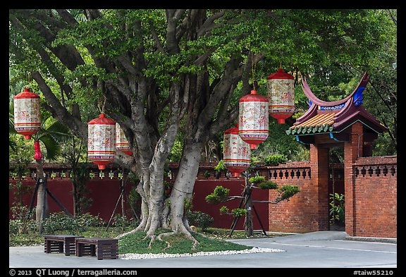 Lanterns hanging from tree, Confuscius Temple. Taipei, Taiwan (color)