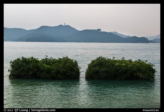 Floating gardens where plants are cultivated. Sun Moon Lake, Taiwan (color)