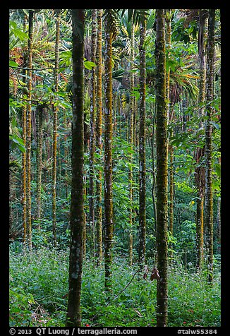 Trees in forest. Sun Moon Lake, Taiwan (color)