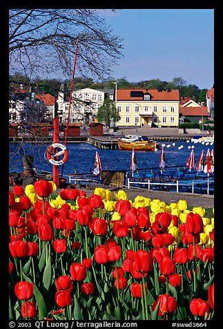 River and tulips, Vastervik. Gotaland, Sweden