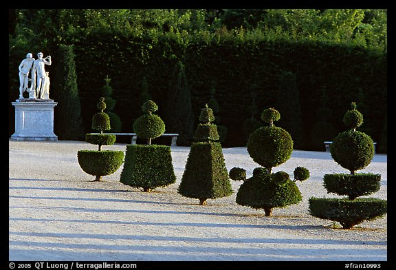 Hedged trees, Versailles palace gardens. France (color)