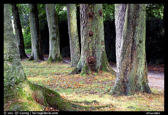 Trees in Palace Gardens, Fontainebleau Chateau. France (color)