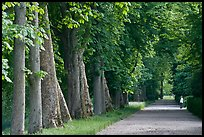 Forested alley, Fontainebleau Palace. France ( color)
