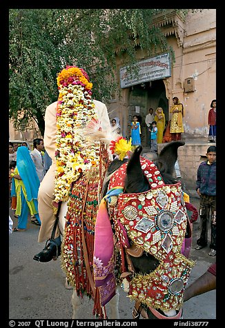 Flower-covered groom riding on horse. Jodhpur, Rajasthan, India (color)