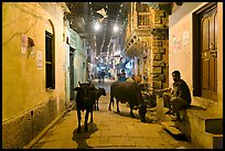 Cows in narrow old city street at night. Varanasi, Uttar Pradesh, India (color)