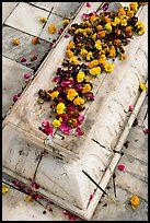 Flowers on tomb, Dargah mosque. Fatehpur Sikri, Uttar Pradesh, India