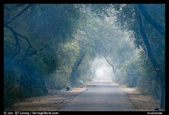 Misty path at down, Keoladeo Ghana National Park. Bharatpur, Rajasthan, India (color)
