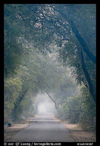 Main path in the dawn mist, Keoladeo Ghana National Park. Bharatpur, Rajasthan, India (color)