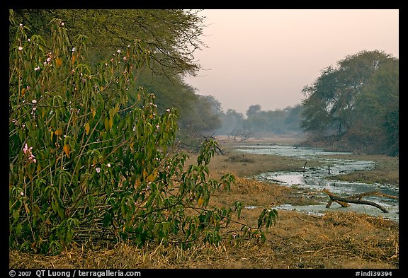 Wetlands at dawn, Keoladeo Ghana National Park. Bharatpur, Rajasthan, India (color)