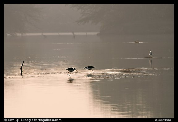 Wadding birds in pond, Keoladeo Ghana National Park. Bharatpur, Rajasthan, India (color)