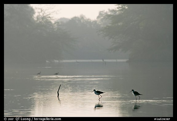 Pond with wadding birds, Keoladeo Ghana National Park. Bharatpur, Rajasthan, India (color)