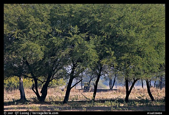 Trees, Keoladeo Ghana National Park. Bharatpur, Rajasthan, India (color)