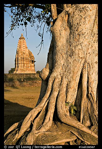 Tree and Javari Temple, Eastern Group. Khajuraho, Madhya Pradesh, India (color)