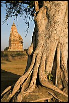 Tree and Javari Temple, Eastern Group. Khajuraho, Madhya Pradesh, India