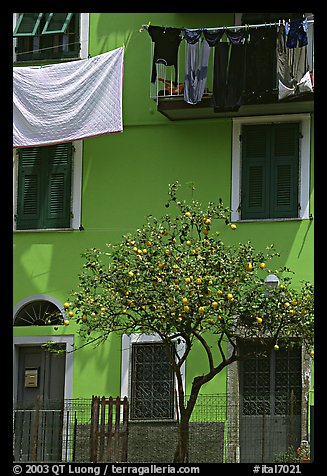 Green house facade with tree and hanging laundry, Riomaggiore. Cinque Terre, Liguria, Italy (color)