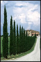 Rural road lined with cypress trees, Le Crete region. Tuscany, Italy ( color)