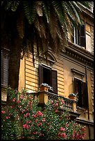 Palm tree and building. Rome, Lazio, Italy ( color)