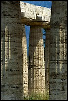 Columns of Temple of Neptune in Doric style. Campania, Italy ( color)