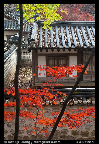 Bright Autumn Leaves And Traditional Architecture Yeongyeong Dang Changdeok Palace Seoul South Korea