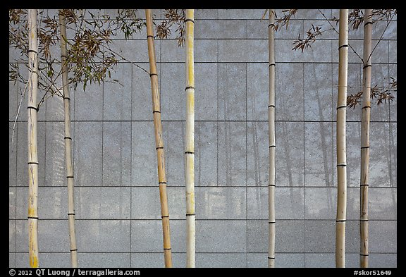 Bamboo reflected in marble wall, Dongdaemun Design Plaza. Seoul, South Korea (color)