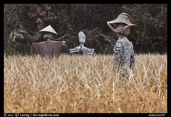 Scarecrows in field. Hahoe Folk Village, South Korea (color)