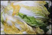 Baechu (napa cabbage) used for kimchi. Gyeongju, South Korea (color)