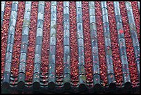 Tile roof with fallen red maple leaves, Bulguksa. Gyeongju, South Korea (color)