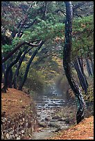 Stream flowing over terraces, Mt Namsan. Gyeongju, South Korea (color)
