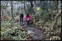 Hikers on Eorimok trail, Mt Halla. Jeju Island, South Korea (color)