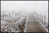 Frozen path and fog, Yeongsil trail, Hallasan. Jeju Island, South Korea