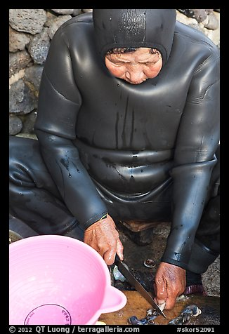 Haeneyo woman cutting seafood. Jeju Island, South Korea (color)