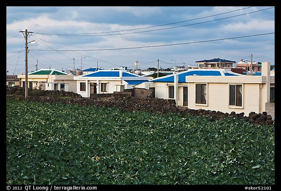 Houses with blue roofs, Seongsang Ilchulbong. Jeju Island, South Korea (color)