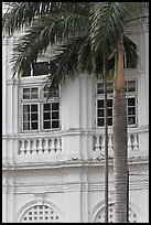 Palm and facade detail, city hall. George Town, Penang, Malaysia ( color)