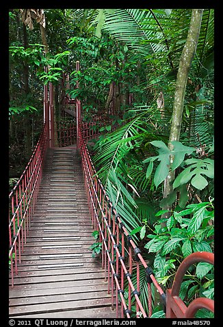 Suspended boardwalk, forest reserve. Kuala Lumpur, Malaysia (color)