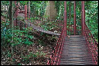 Boardwalk in dipterocarp forest reserve. Kuala Lumpur, Malaysia (color)