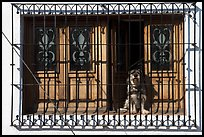 Window with forged metal grid and dog, Tlaquepaque. Jalisco, Mexico ( color)