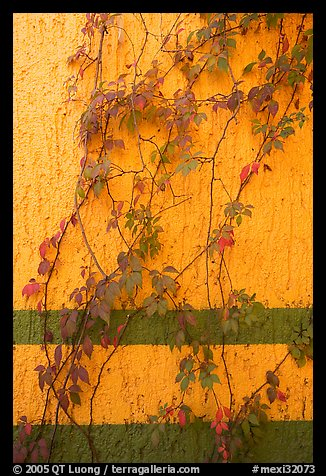 Wall and plant, La Posada bed and breakfast, Tlaquepaque. Jalisco, Mexico (color)
